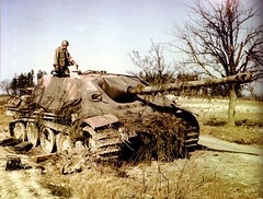 A knocked-out Panzerjager (tank destroyer) V Jagdpanther SdKfz 173 is examined by an American soldier, probably of the 9th Army. While the date and place of this photo is disputed, the red primer on the vehicle, the soldier's uniform, and the absence of leaves on the trees probably indicate that it was taken during the Americans' advance into Germany in March-April 1945. Since civilians and sodliers would strip knocked-out tanks of anything useful, it's likely this photo was taken within a week of the tank being destroyed. It's possible this was a Panzer Lehr Division vehicle. The impact of anti-tank rounds can be seen along the road wheels. This vehicle has an early version of the 88mm (3.46 inch) Pak 43/3 L/71 gun that was a single tube; later versions of the Jagdpanther had two joined tubes that comprised the gun barrel. The gun mounting is a later version, indicating the barrel was replaced at some point with an earlier version, or this vehicle was built just as the factory was transitioning to the late model Jagdpanther. Widely considered to be the best tank destroyer of the war, the Jagdpanther was available in small numbers to units, as only 400 were made between December 1943 and the end of the war.