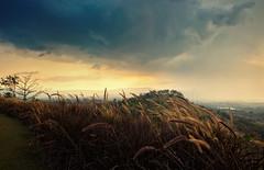 Watching The Storm (Charn High ISO Low IQ) Tags: sunset landscape thailand countryside day cloudy hills greenery pampasgrass darkcloud khaoyai windblow nakhonratchasima salakhaoyairesort