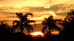 April 14th Sunset (Jim Mullhaupt) Tags: blue sunset wallpaper sky orange sun tree silhouette yellow night clouds landscape evening flickr contrail florida palm bradenton cloudsstormssunsetssunrises