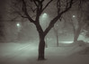 """Montreal Snow Storm Landscape, March 14th 2017 - Montreal, Quebec, Canada (Photographie Alexi """"Alvin"""" Dagher Photography) Tags: alvin bw montreal nopeople outdoors photographer photography alotofsnow bandw blackandwhite bnw carlights cold creepy dawsoncollege dramatic evening haze hazy horizontal landscape lotsof lowvisibility march142017 monochrome noone nobody parkinglot photos pics pictures snowstorm splittoning toned trees westmount winter yard ©alexidagher quebec canada"""