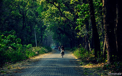 The forest road (mala singh) Tags: road forest trees vehicles westbengal india