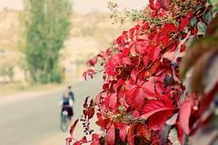 #cappadocia #goreme #spring #red #bicycle (unchartedackles) Tags: bicycle cappadocia goreme red spring