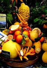 Agrumi (dona(bluesea)) Tags: agrumi citrusfruits arance oranges limoni lemons cedri cedars ortobonanico bontanicalgarden palermo sicilia sicily italia italy