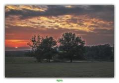 UN MONDE EN EQUILIBRE (régisa) Tags: dordogne périgord pourpre kingcrimson arbre tree sunset coucher soleil monfaucon