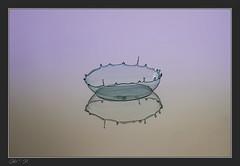 La coupe est vide (Tof_Man13) Tags: canon 7d macro drop droplet water eauliquide hightspeed studio waterdrop