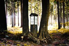 100 years ago... (anno 1917) (Veitinger) Tags: veitinger germany deutschland sachsen saxony wald forest bäume trees natur nature landschaft landscape wegweiser roadsign 1917 2017 100years