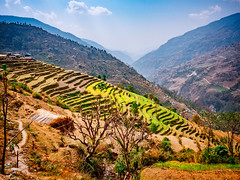 Terrace farming on the foothills of the Himalayas, Nepal (CamelKW) Tags: abc annapurnabasecamptrek annapurnaregiontrek annapurnasanctuary fishtail kathmandu mbc machapuchare machapucharebasecamp nepal pokhara trekking