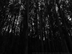 El Tabo (Lugar_Citadino) Tags: city town beach nature landscape land earth forest trees sky air silence quiet solitude autumn afternoon ciudad pueblo playa naturaleza paisaje tierra bosque árboles cielo aire silencio tranquilidad soledad otoño americas américa latinamerica américalatina southamerica américadelsur chile regióndevalparaíso provinciadesanantonio ciudaddesanantonio puertodesanantonio sanantonio ilustremunicipalidaddesanantonio municipalidaddesanantonio comunadesanantonio eltabo ilustremunicipalidaddeeltabo municipalidaddeeltabo comunadeeltabo elquisco ilustremunicipalidaddeelquisco municipalidaddeelquisco comunadeelquisco santuariodelanaturalezaquebradadecórdova quebradadecórdova esterodecórdova mardechile océanopacífico islanegra elmembrillo eltotoral lomaverde puntadetralca eltabito lascruces nuevocaminocostero canon canonsx60hs
