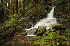 Forest Stream (Crisp Image Photography) Tags: waterfall ridgepark coquitlam stream forest coastalbc rainforest temperateforest britishcolumbia creek spring nature green lush naturescene naturephotography outdoorphotography kevinlippe crispimagephotography canon canon1dxmarkii