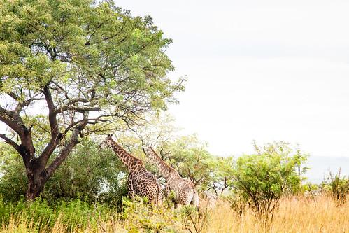 KrugerParkREIZ&HIGHRES-13