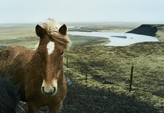 Nice meeting today: Icelandic horse. (amanecer334) Tags: nature horse landscape beautiful scandinavia iceland island icelandic animal river water travel explore