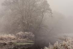 Pinch (jellyfire) Tags: forest hoxne landscape landscapephotography sonnartfe55mmf18za sony sonya7r winter atmospheric cold fog frozen hoarfrost leeacaster mist trees woods wwwleeacastercom zeiss