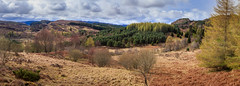 Early spring colours in Perthshire (Noel Wyn Davies) Tags: panorama spring perthshire scotland dunkeld moorland woodland mixed sunshine colours grass bracken heather birch larch conifers hills