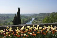 _DSC0854 (Riccardo Q.) Tags: parcosegurtàtulipani places parco altreparolechiave fiori tulipani segurtà