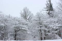Snow Covered Trees (pegase1972) Tags: quebec tree winter québec canada qc arbre hiver snow neige monteregie montérégie licensed shutter dreamstime fotolia rf123
