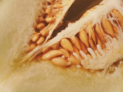 Mouthwatering Melon (oliviagravatt) Tags: pips fresh fruit closeup juicy melon seeds macromonday inside abstract patterns bridgecamera