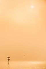 Good morning! (© Jenco van Zalk) Tags: nophotoshop fineart minimalistic landscape portrait orange yellow bird birds geese sunrise sun sunlight reflection lake water pole fog mist nature naturallight morning real
