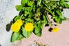 """"""" KENTDOĞA """" (murathanduran1) Tags: makro macro tepekent büyükçekmece istanbul türkiye turkey fotoğraf photo bahar spring"""