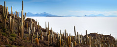 Isla del Pescado. (J.M.Fransen (jero 053) on/off) Tags: cacus cacti salar de uyuni jero053 jeroenfransen salardeuyuni bolivia desert saltplain saltflat green landscape pano panorama hr hq salt