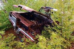 IMG_2617 (Irina Souiki) Tags: rusty crusty cars mcleansautowreckers milton ontario old oldcars