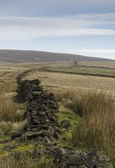 The Wall (l4ts) Tags: landscape derbyshire peakdistrict darkpeak southhead drystonewall brownknoll heather moorland gritstone grasses