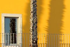 Sombra e reflexo (Américo Meira) Tags: portugal paçodearcos tronco trunk reflexo shadow reflection