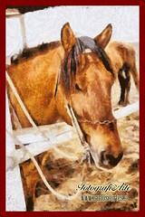 Pichilemu (carloscortes.cl1) Tags: chile pichilemu mar laguna naturaleza caballos