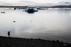 The icebergs and the guy (Vivid Silence) Tags: jökulsarlon iceberglagoon iceberg water sea atlantic ocean glacier iceland island ice landscape nature beautiful wilderness