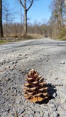 X1 (joe-so) Tags: forest way weg wald tannenzapfen beautifulexpression simplysuperb joeso zoomin
