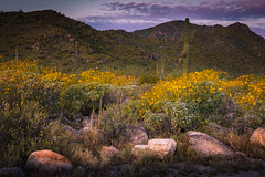 20170320-DSC_4938 (lilnjn) Tags: arizona landscape southwestunitedstates travel unitedstates sky sunrise whitetank