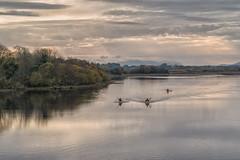 Canoes at Sunset (Hattifnattar) Tags: ireland castlebar loughlannagh canoe sunset landscape goldenhour pentax fa77mm limited