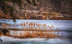 Swamp-Grass (desouto) Tags: nature landscape rivers lakes snow ice sky trees sunrise sunset colors