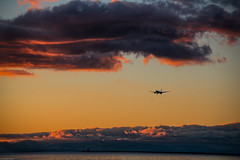 I hope you all have a great weekend! Keep smiling😊Cheers! (Sonika Arora 604) Tags: yvr airport vancouver vancity airplane plane sunset clouds color colors orange pink contrast vibrant explorebc beautiful beautifulbc explorerichmond richmond explorecanada nature naturallight light shadows water ionabeach park airplanes landscape landscapephotography nikon nikonphotography nikonphotographer