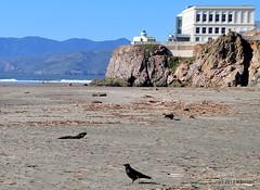 DSC_0301-001 (rachidH) Tags: scapes views pacific ocean sealrocks cliffhouse sutro baths tide lowtide lobos pointlobos oceanbeach sanfrancisco sf sanfran california rachidh nature