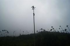 Cocora (MeliAyalaR) Tags: cocora colombia nublado paisajes sky cielo palms palmas alto high