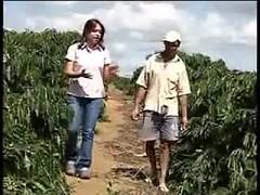 História da produção e comercialização do café de São Domingos das Dores-MG (portalminas) Tags: história da produção e comercialização do café de são domingos das doresmg