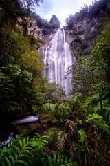 Shine Falls (lizcaldwell72) Tags: trees hawkesbay newzealand waterfall water sky shinefalls nativebush ferns light
