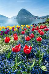#036 Parco Ciani - Primavera 2017 (Enrico Boggia | Photography) Tags: tulipani fiori parcociani ciani lugano ceresio lagodilugano montesansalvatore sansalvatore aprile 2017 enricoboggia