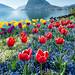 #036 Parco Ciani - Primavera 2017 (1600px sRGB)