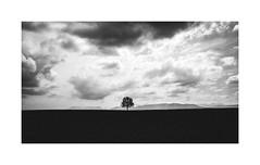Clouds surround me (cardijo) Tags: wagingamsee deutschland germany landscape landschaft tree baum bw blackandwhite