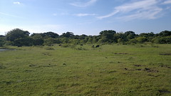 Yala National Park (KanCanDo) Tags: park wildlife safari sri national srilanka yala