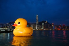 Bathing in the Victoria's Harbour (Ali Tse) Tags: hongkong duck publicart  rubberduck tsimshatsui duckie rubberduckie  yellowduck  giantduck florentijnhofman yellowduckie dutchartist victoriasharbour rubberduckproject hkrubberduck