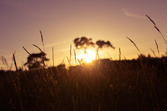 Summer Nights III (FranklyVic) Tags: summer sky sun nature field grass sunshine silhouette golf golden evening lensflare nights goldenhour