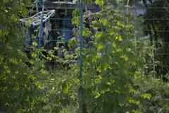 20130719-_DSC7812 (Fomal Haut) Tags: walking nikon  80400mm d4     sanpocamera