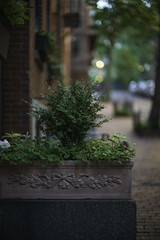 L1001299 (sswee38823) Tags: street leica flowers flower boston ma bokeh massachusetts bostonma beaconhill noc leicam noctilux095 noctiluxm50mmf095asph