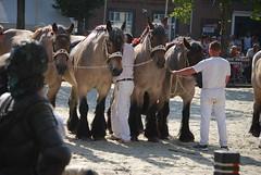 trekpaardkeuring ijzendijke 21072013 3943 (jo_koneko_san) Tags: horses horse holland netherlands cheval nederland zeeland chevaux hollande zeeuwsvlaanderen 2013 ijzendijke trekpaard zeeuwstrekpaard trekparden
