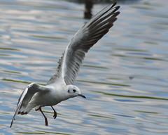 wetlandbirdrevival
