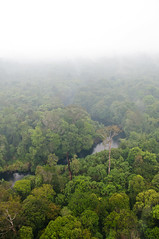 Haze from the forest fires (CIFOR) Tags: water river sumatra indonesia fire haze flickr smoke aerial environment forests forestfires hti riau verticals pekanbaru