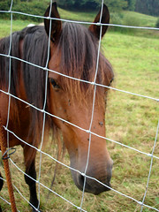 Potro tras alambre. (margabel2010) Tags: espaa spain asturias animales pelo rejas mamferos alambres praderas
