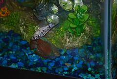 plants fish glass toys neon tank air plastic bubbler